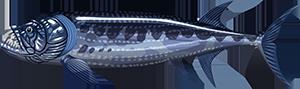 Xiphactinus   FISHAO website