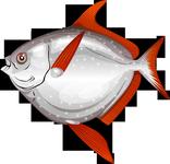 Opah fishao website for Opah fish price